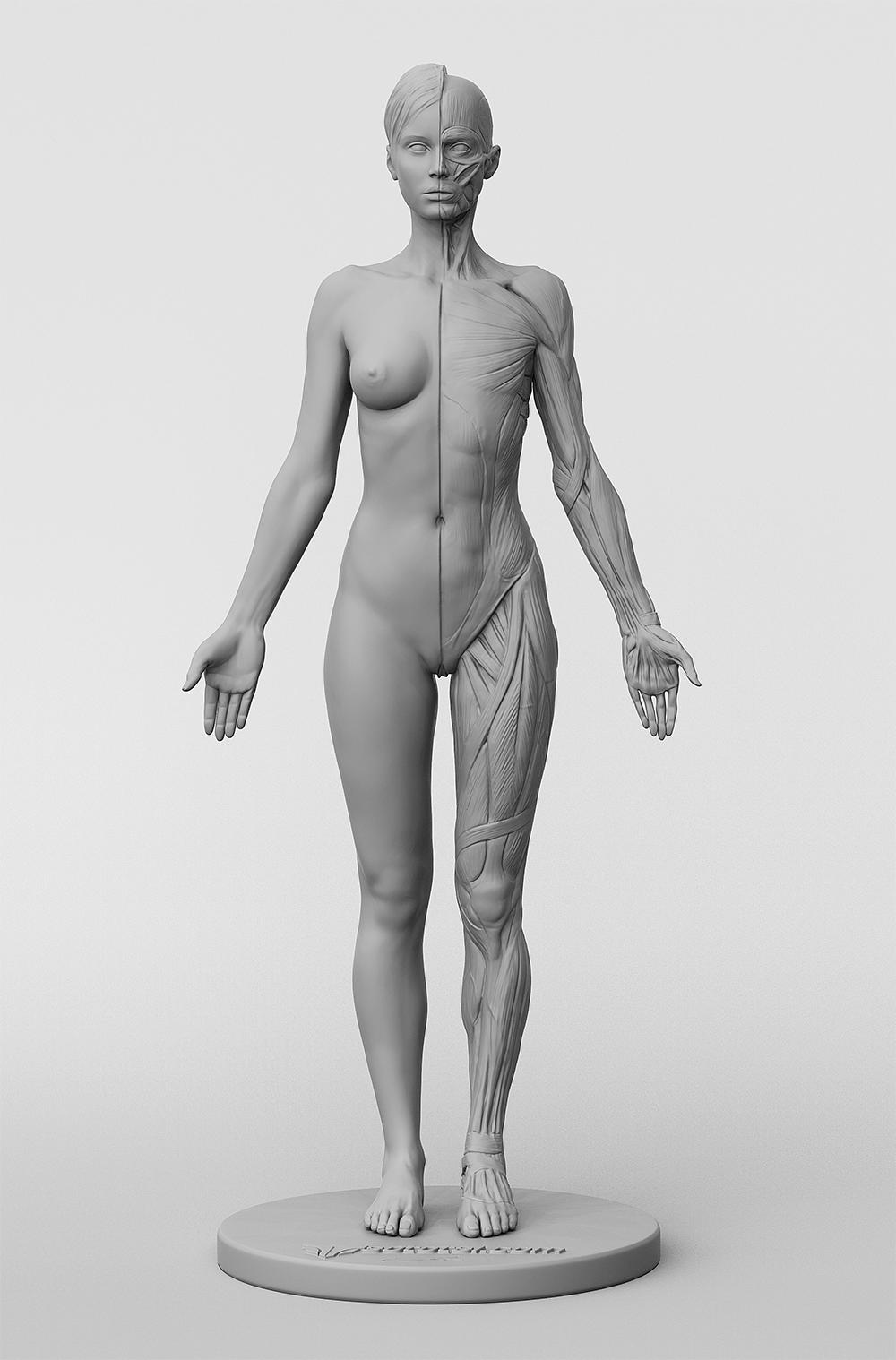 3dtotal Anatomy: female figure //