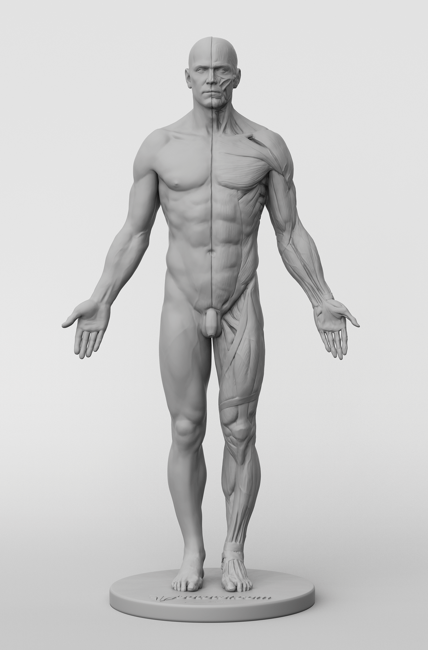 3dtotal Anatomy Male Figure
