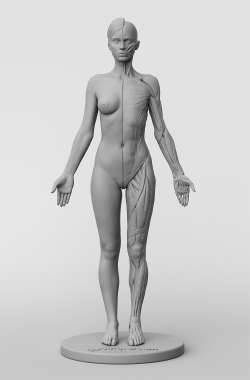 3dtotal's anatomical collection: female figure