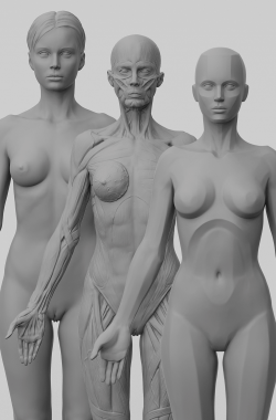 3dtotal's anatomical collection: 3 piece set of female figures
