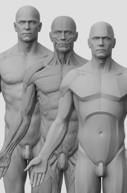 3dtotal Anatomy: 3 piece set of male figures
