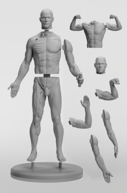 3dtotal Anatomy: Adaptable male figure