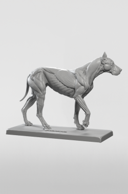 3dtotal Anatomy: Canine figure