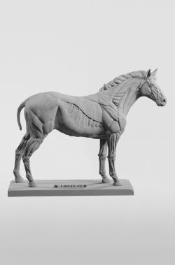 3dtotal Anatomy: Equine figure