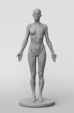 3dtotal Anatomy: female full ecorche figure