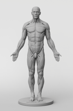 3dtotal Anatomy: male full ecorche figure
