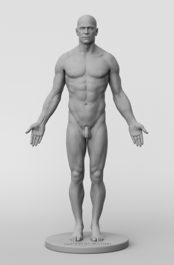 3dtotal's anatomical collection: male full skin figure