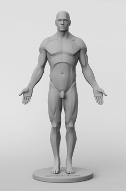 3dtotal's anatomical collection: male planar figure