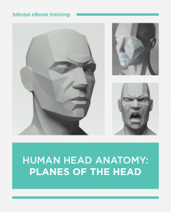 Human Head Anatomy: Planes of the Head (Download Only)